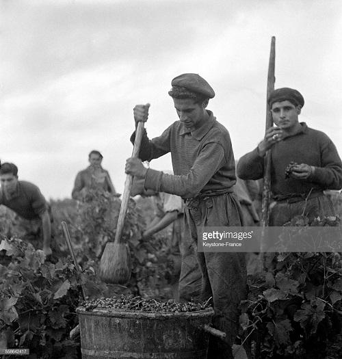 работа на винограднике 1940 2.jpg