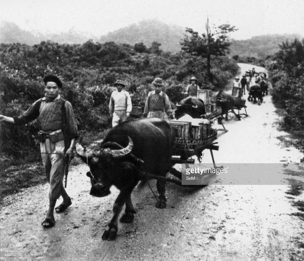 1 буйволы 1954 не к.jpg