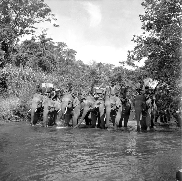 слоновий патруль апр 1952 рауль кутар.jpg