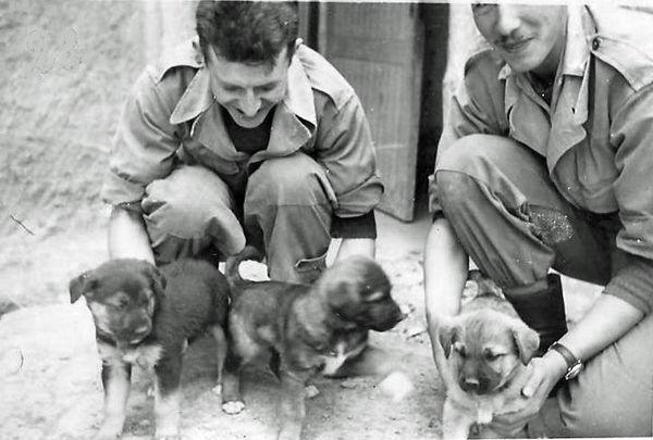 Сержанты Поло и Эркюль со своими собаками.jpg