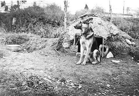 собака из взвода инструкторов собак.jpg