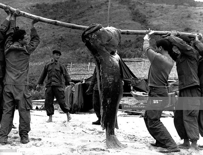 Коммандос с рыбой 1953 Перо.jpg