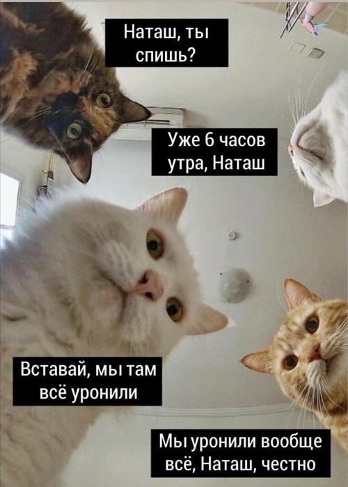 коты 0.jpg