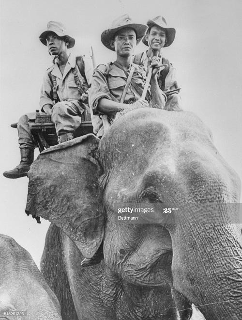 Слоновый патруль7 фев 1954.jpg