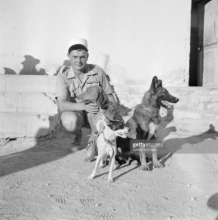 с собакой 9 июля 1955 Дж гарафало 2.jpg