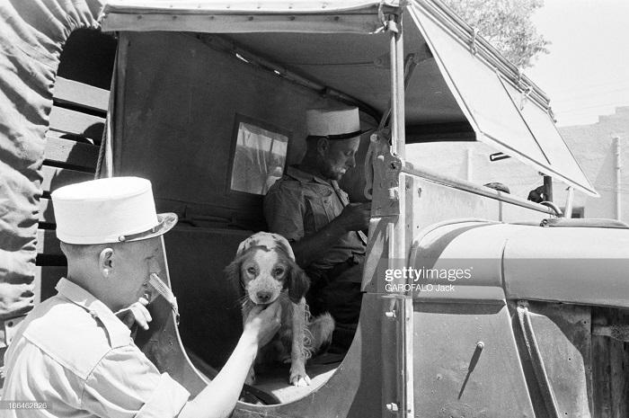 с собакой 9 июля 1955 Дж гарафало 5.jpg