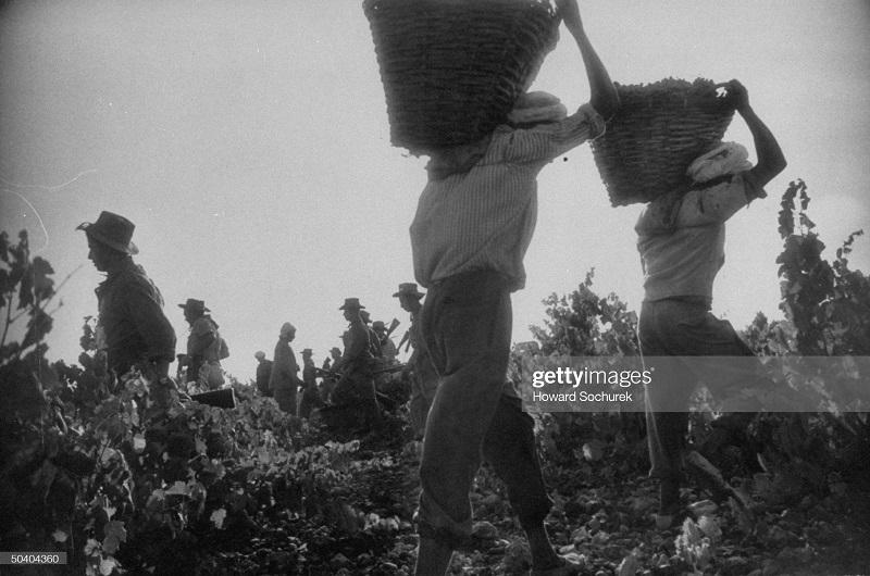 сбор урожая сент 1957 г сохурек.jpg