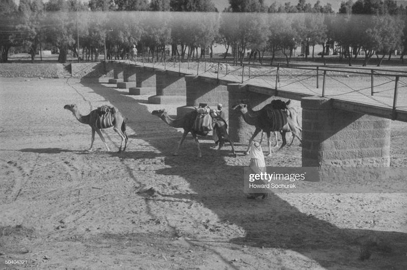 Верблюды сент 1957 Сохурек.jpg