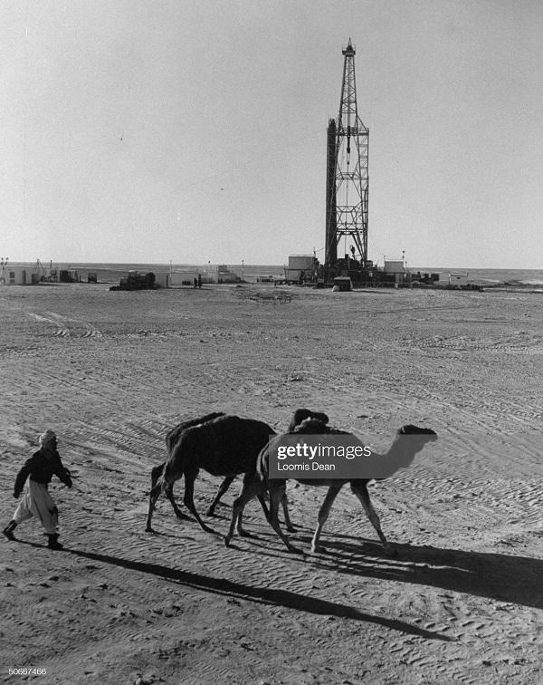верблюды в пустыне 1957.jpg