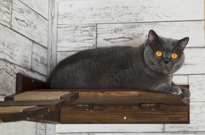 Кот на котополке. По совместительству - директор по качеству CATKIT
