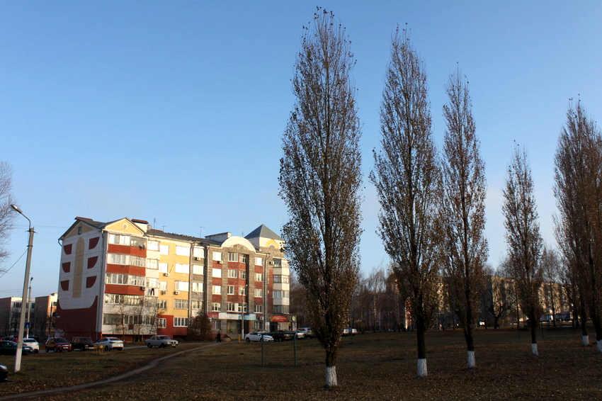 Фото пос северный белгородская область
