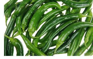 Зелёный стручковый перец
