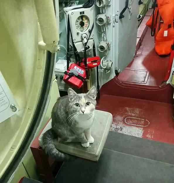 кошка на подводной лодке