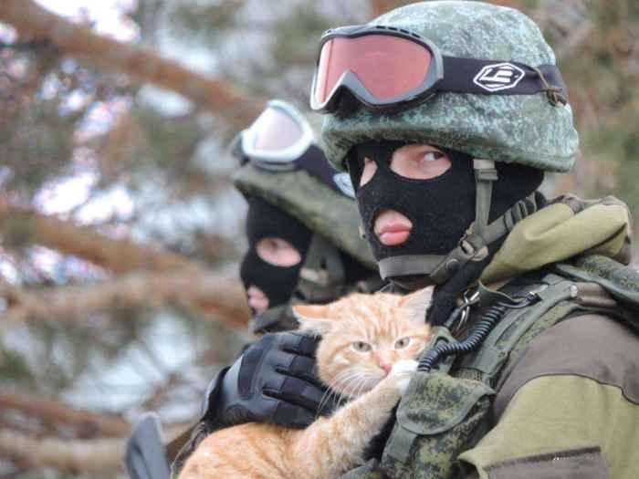 кот в армии