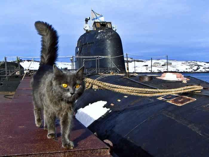 Кот и наша подводная лодка