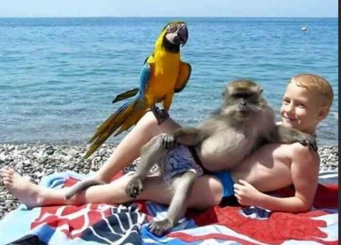 Фото с обезьянкой и попугаем