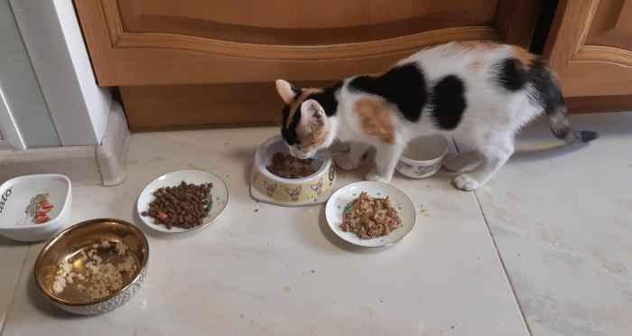 Марфушенька - Душенька кушает