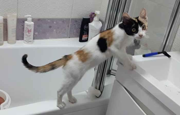Марфуша водяная кошка