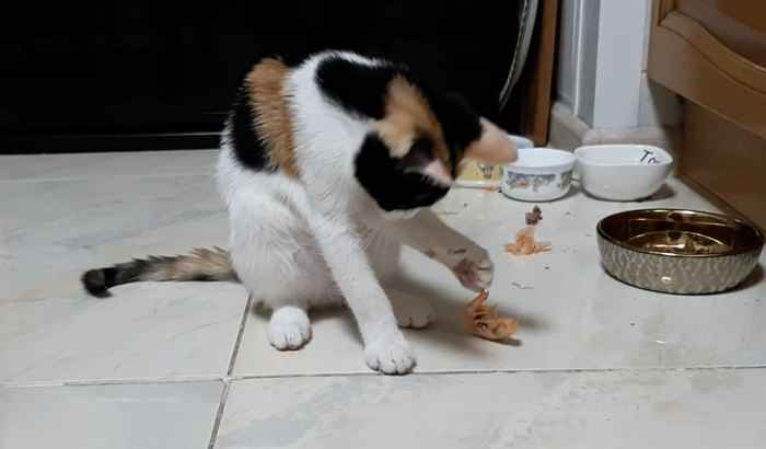 Марфушенька - Душенька кушает креветку