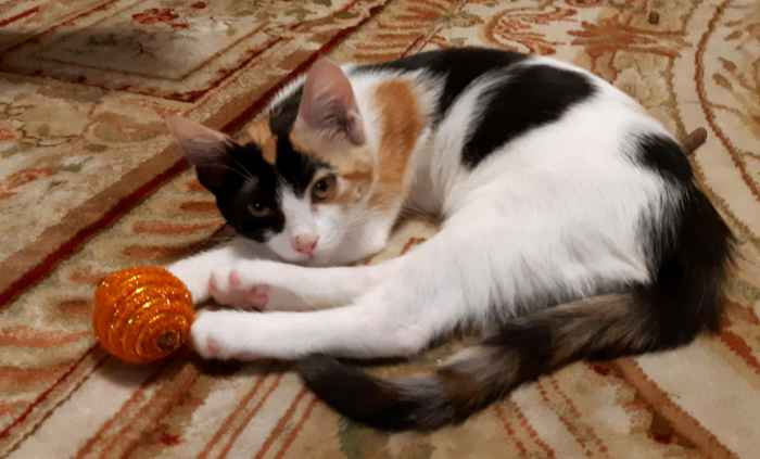 Марфушенька - Душенька с мячиком