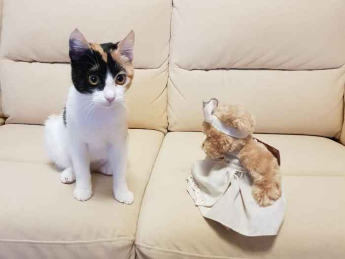 Марфушенька - Душенька маленький котёнок