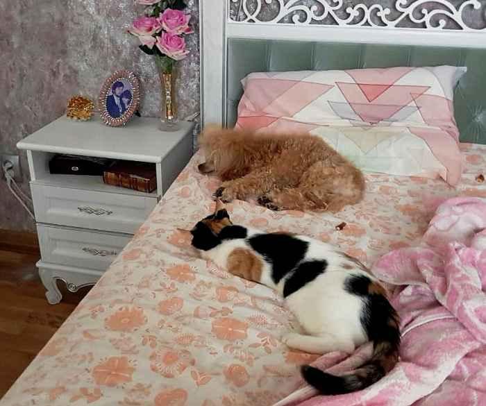 Кешью Мой Нежный Ангел и Марфушенька - Душенька