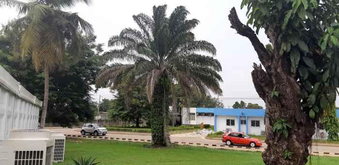 Медицинский университет в Абиджане