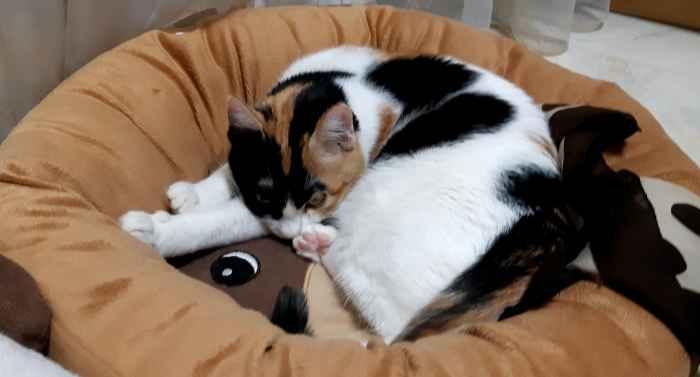 Марфушенька - Душенька в лежачке