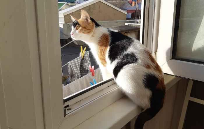 Марфушенька - Душенька смотрит из окна
