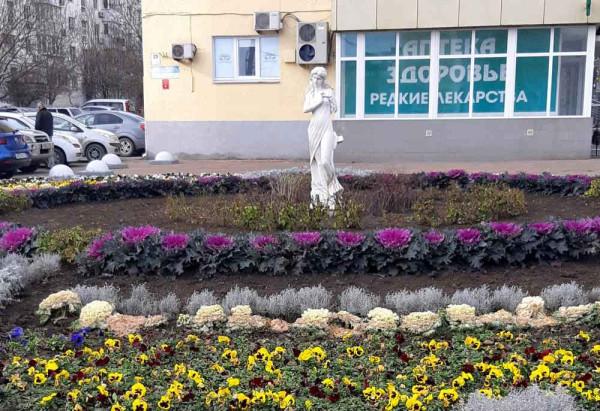 Новороссийск. Клумба на проспекте Ленина