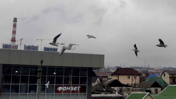 Чайки в Новороссийске