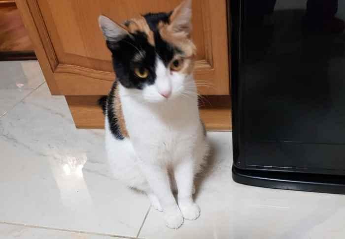 Марфушенька - Душенька скромно сидит около холодильника