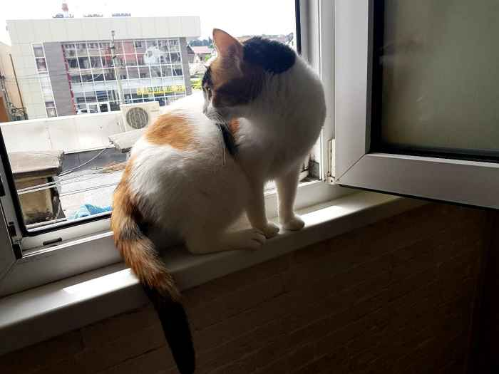 Марфушенька - Душенька девица у окна