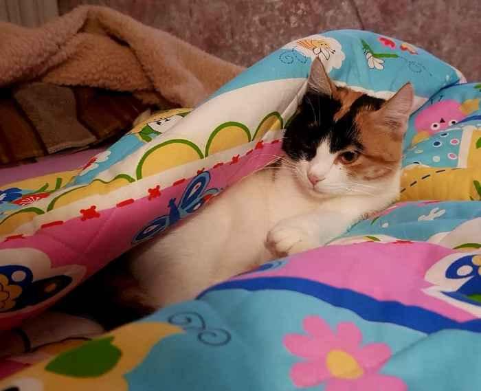 Марфушенька - Душенька под одеялом