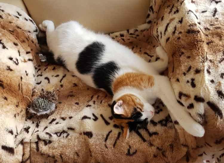 Марфушенька - Душенька на кресле