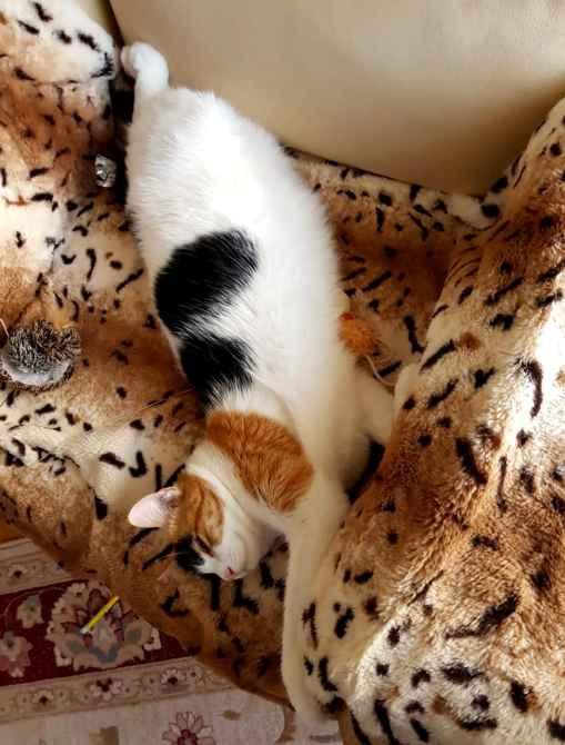 Марфушенька - Душенька. Чуткий кошачий сон