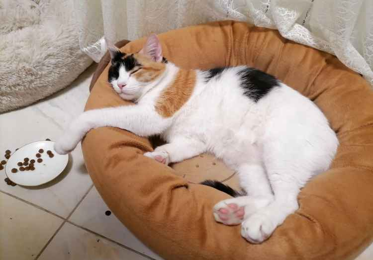 Марфушенька - Душенька в своём лежачке