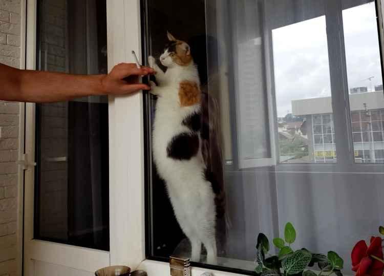 Марфушенька - Душенька общается через стекло