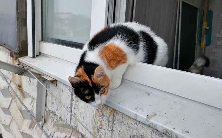 Марфушенька - Душенька на балконе