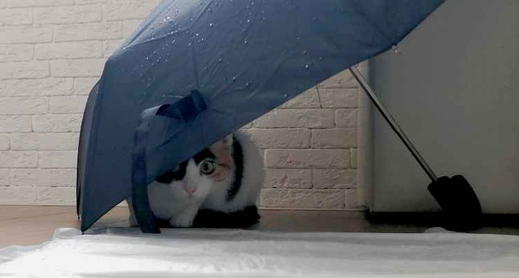 Марфушенька - Душенька под зонтиком