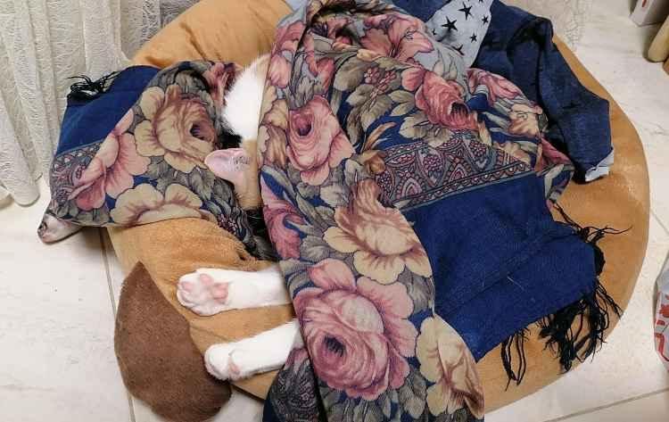 Кошкины розовые пяточки