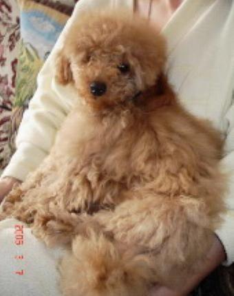Элтон маленький щенок