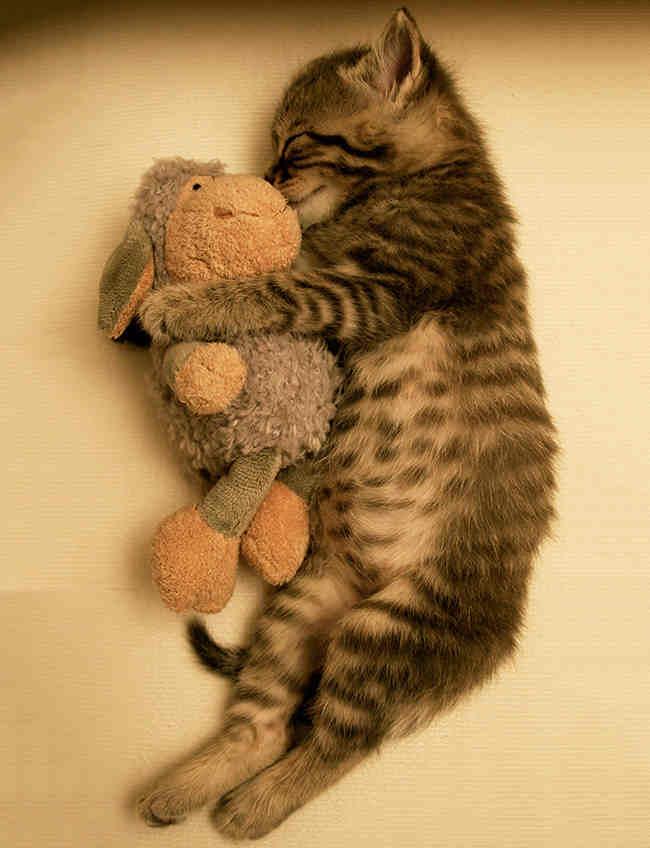 Спокойной ночи, малыши