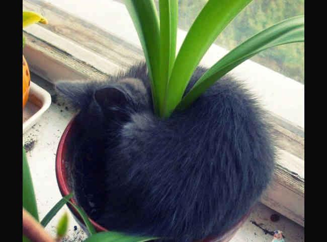 Утеплитель растений