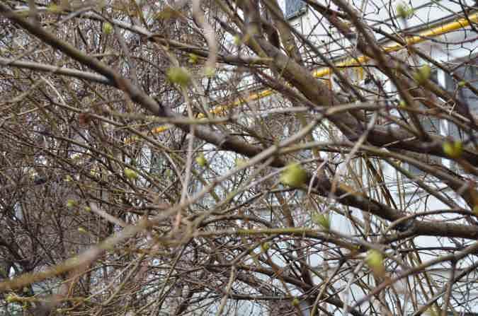Новороссийск деревья