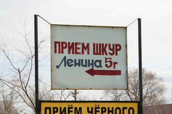 Шкуры Ленина