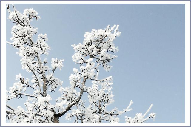 frostbranch2pixlj
