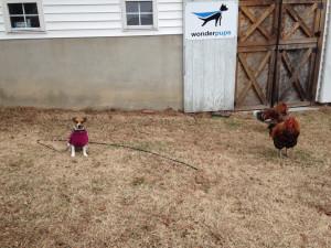 spriggsandchickens