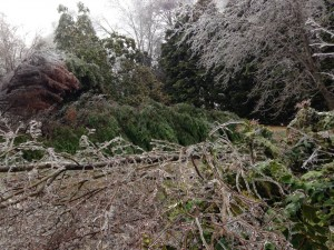 icestorm2014