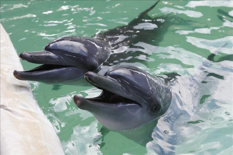 картинки боевых дельфинов один простой